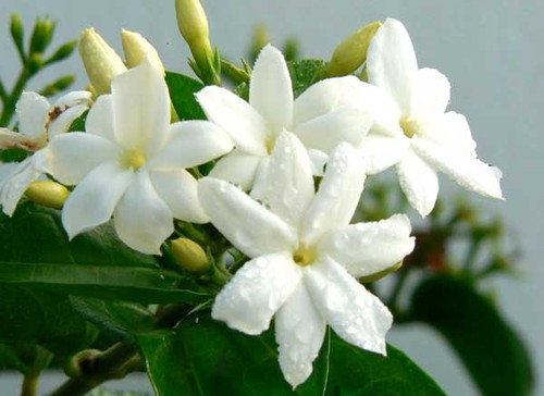 Astrological remedies through FLOWERS – Astrology & Spirituality